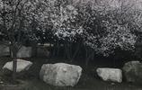 山西的小江南——永濟的春景