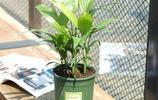 家裡空氣差,別噴清新劑!這8種盆栽比香水還香,把鄰居都引來了
