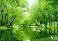上海市還有做苗圃的嗎?