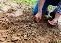 印度農業科技公司CropIn完成800萬美元B輪融資,蓋茨基金參投