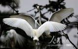 江西象山森林公園白鷺嬉戲吸引遊客觀賞