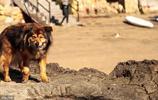 老狗常見的9個疾病,它們不聽話別責怪,可能只是因為老了