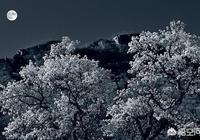 古人以詩寄情,寫出了眾多意境優美的詩詞,有哪些以明月為題的詩詞?