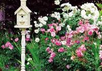 正逢這個換花土的好季節,你一定需要這些乾貨,花花們正在等你~