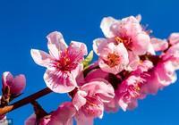你沒有桃花?教你怎樣催旺自己的桃花