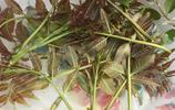 天然香椿和自家種的辣子的結晶:香椿辣子