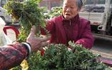 河南農村,吃過這幾種野菜的朋友,證明你已經老了