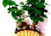 盆栽別買了?把這5種蔬菜頭扔水裡,發芽長出盆栽,好養又漂亮