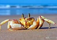 少兒美術《餐桌上的大螃蟹》