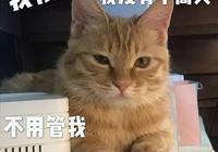 啊!你又惹貓咪生氣啦?那這四招你拿去!