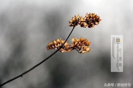 浣溪沙《秋氣漸寒暑意消》文/倪莉