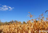 為什麼有些農村人現在不喜歡種地了?對此你怎麼看?