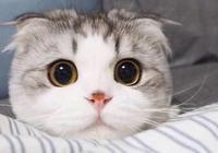 貓也會說話?10年資深貓奴帶你聽懂貓語(一)