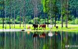 騎行隨手拍:大興安嶺之夏不一樣的風景