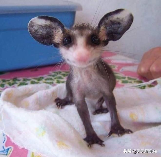 你見過新生的樹懶和松鼠嗎?這10張可愛的動物寶寶照片萌化你的心