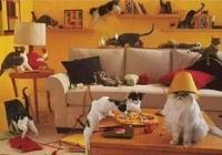 美國硬漢花二十幾年為22只貓爆改住宅!日常擼擼貓,羨煞人也