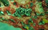潛水之旅-馬來西亞仙本那新佳馬達