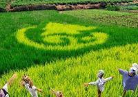 與美國農業合作社相比,中國農業合作社差哪了?