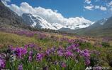 鮮花,遠山,美景如畫