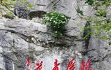 """""""天下第一奇花"""":傲立懸崖上千年,銀屏牡丹花開20朵創紀錄"""