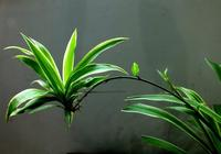 """這3種花,老花匠暖春都要""""修根"""",粗根更壯實,還能開花多!"""