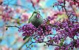 萌寵:鳥語花香