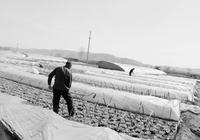 原平利用城郊優勢大力發展蔬菜種植業