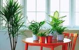 家居風水學問多,綠植擺放位置正確也可以招財!你值得一看哦!