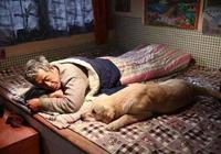 電影《忠愛無言》怎麼樣?和《忠犬八公》比呢?