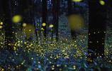 夏季日本岡山縣成了螢火蟲的世界,這不就是童話裡嗎?