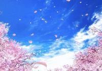 """在中山這個地方,可以免費欣賞粉紅""""櫻花""""!"""