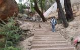 雲南大山深處有座寺廟,猴子很多經常搶路人東西,遊客:嚇壞了!