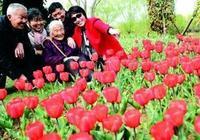 市民來到淮安婚慶文化風情小鎮賞花遊玩