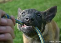 三月齡狗狗可以進行的訓練