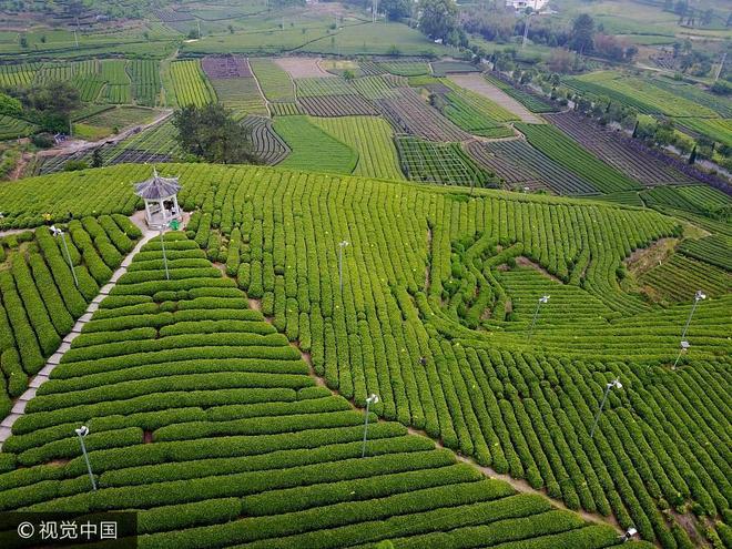 航拍浙江麗水大木山茶園景區 春色如畫遊客眾多