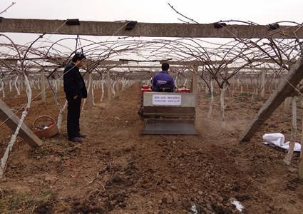 獼猴桃園施肥技術要點