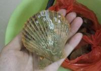 蒜蓉粉絲蒸扇貝