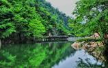攝影圖集:南陽西峽銀樹溝