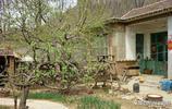 農村小院現在成了寶貝,大爺大媽說城裡給套別墅都不換,你看值嗎