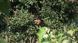 馬蜂窩不僅僅掛在樹上,還有在地下的蜂窩,你都見過嗎