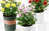 春暖花開,給自己家種上這幾款盆栽,簡單打理,滿屋都飄香