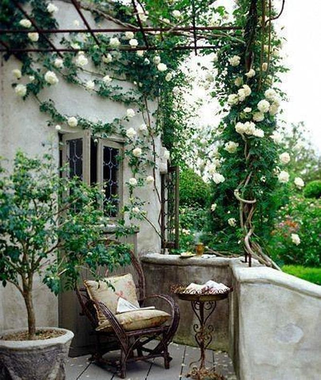 3平米小陽臺,女主讓它在爬藤月季中美成詩和田野
