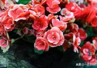聽說北方花友每家陽臺都會養這6種花!媽媽再也不用擔心花卉掛掉