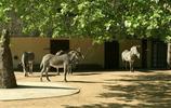 旅行的日記 建於1858年現今歐洲最大的動物園之一擁有600多種動物