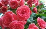 別再養綠蘿吊蘭了,這花美觀又好養,扔土裡就能活,四季花開不休