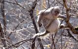 雲南旅遊景點推薦,帶你走進香格里拉《塔城滇金絲猴國家公園》