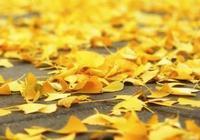 養生——秋季養生