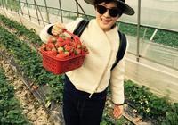 孫儷帶兒子農莊郊遊摘草莓,不偷吃素質高,鄧超爸爸哪兒去了?
