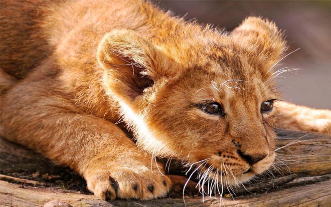 動物圖集:動物世界凶猛動物