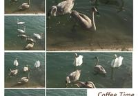 庫爾勒孔雀河畔,一座有天鵝的城市